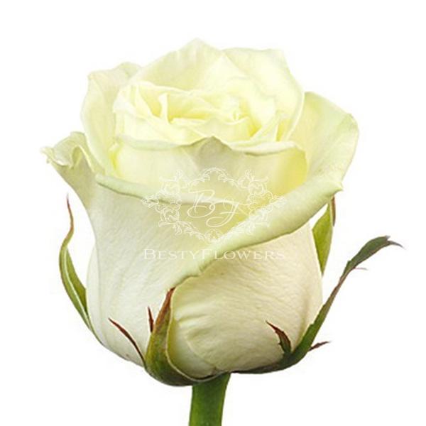 7 цветы оптом продажа москва #8